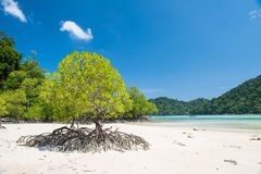 Mangrove Royalty Free Stock Photography