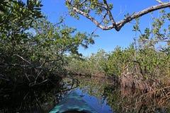 Mangrove som Kayaking fotografering för bildbyråer