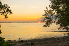 Mangrove Sunrise Royalty Free Stock Photo