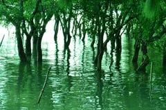 Mangrove before Sunset Stock Photo
