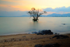 Mangrove in sunset Royalty Free Stock Images