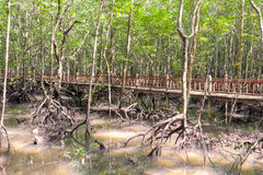 Mangrove swamp. At the Kilim Geoforest Park, Langkawi, Malaysia royalty free stock photography