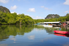Mangrove swamp. Scenery of the Mangrove swamp Stock Photo