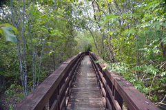 Mangrove swamp boardwalk. Photo of a boardwalk leading through a mangrove swamp stock photos
