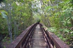 Mangrove swamp boardwalk. Photo of a boardwalk leading through a mangrove swamp Stock Photos