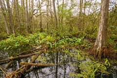 Mangrove Swamp on a Cloudy Day Stock Images