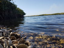 Mangrove swamp Royalty Free Stock Photography