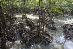 Mangrove swamp Stock Photo