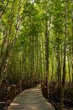 Mangrove in Thailand Royalty-vrije Stock Foto