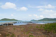 Mangrove Thailand. Stock Photo