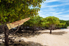 Mangrove Tour. The northeastern part of the island of Nusa Lembongan, Bali, Indonesia, is covered by a relatively large mangrove forrest Stock Photos