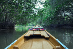 Mangrove Tour. Wild suburban boulevards filled with mangroves and the abundance of nature Stock Images