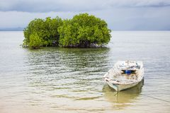 Mangrove tree and boat in water Stock Photography