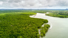 Mangrove tree forest Royalty Free Stock Image
