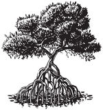 Mangrove Tree Ink Style Vector Cartoon Illustration Stock Images