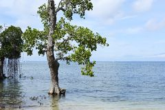 White Mangrove Root System On A Saltwater Bay Stock Photo