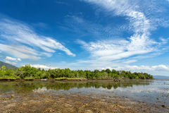 Mangrove tree North Sulawesi, Indonesia Stock Images