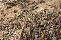 Mangrove tree root Stock Images