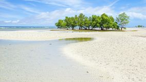 Free Mangrove Tree. Siquijor Island, Philippines Stock Image - 31145961
