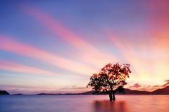 Mangrove tree sunset Royalty Free Stock Photo