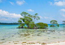Mangrove tree and vast sea Stock Photography