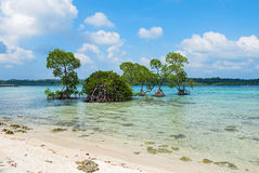 Mangrove tree and vast sea Royalty Free Stock Images