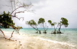 Mangrove Trees Emerald Green waters Andaman sea on Hazy Day. The Vijayanagar Beach on east coast of Havelock island in Andamans is usually very calm, but is Stock Photo