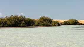 Mangrove trees in the lake in the Ras Muhammad National Park.  stock video