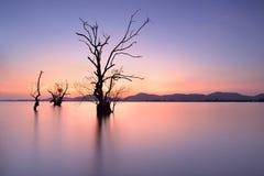Mangrove trees Stock Photo