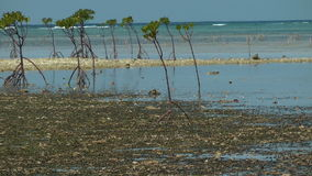 Mangrove trees Royalty Free Stock Images