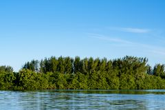 Mangrove trees and other vegetation growing on the edge of Marapendi Lagoon, in Barra da Tijuca, Rio de Janeiro.  royalty free stock images