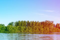 Mangrove trees and other vegetation growing on the edge of Marapendi Lagoon, in Barra da Tijuca, Rio de Janeiro. Colored light lea. Mangrove trees and other stock photo