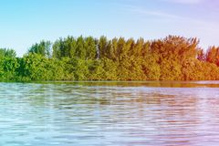 Mangrove trees and other vegetation growing on the edge of Marapendi Lagoon, in Barra da Tijuca, Rio de Janeiro. Colored light lea. Mangrove trees and other royalty free stock image