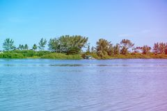Mangrove trees and other vegetation growing on the edge of Marapendi Lagoon, in Barra da Tijuca, Rio de Janeiro. Colored light lea. Mangrove trees and other stock images