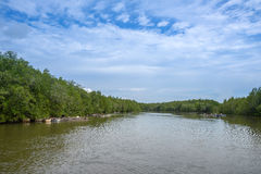 Mangrove trees with a quiet current and clouds Royalty Free Stock Images