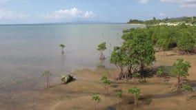 Mangrove trees stock video