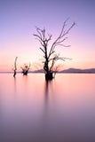 Mangrove trees Royalty Free Stock Photos