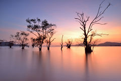 Mangrove trees Stock Photography