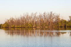 Mangrove trees and swamp in Florida Stock Photo