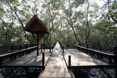 Mangrove trees of Thung  Prong Thong forest Stock Photography