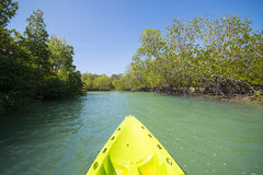 Mangrove view from the canoe Royalty Free Stock Image