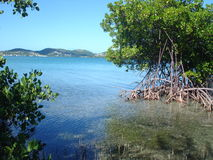 Mangrove View, Puerto Rico, Caribbean. View from Mangroves out to Culebra, Puerto Rico Costa Bonita Stock Photos