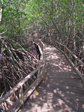 Mangrove Way Royalty Free Stock Photo