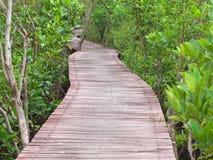 Mangrove Way stock photography