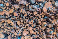 Mangrove timber pile. royalty free stock images