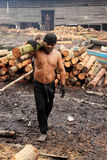 Mangrove wood charcoal worker. TAIPING, MALAYSIA - DECEMBER 17: Unidentified worker carrying raw mangrove Royalty Free Stock Images
