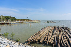Mangrove wood. Near jetty with cloudy scene Royalty Free Stock Photos