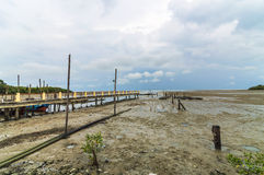 Mangrove wood. Near jetty with cloudy scene Stock Photos