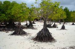 Mangrove Zanzibar, Tanzania, Februari 2019 royaltyfria foton