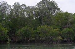 Mangrove Zanzibar, Tanzania, Februari 2019 royaltyfria bilder
